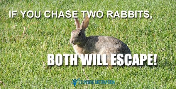 rabbit-chase