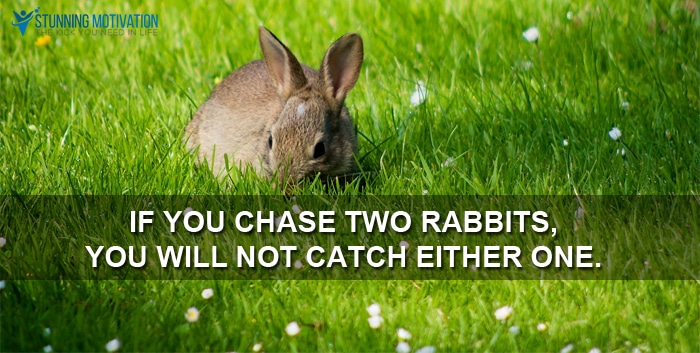 chase two rabbits