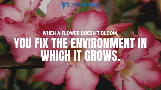 When a flower doesn't bloom, you fix the environment in which it grows, not the flower.